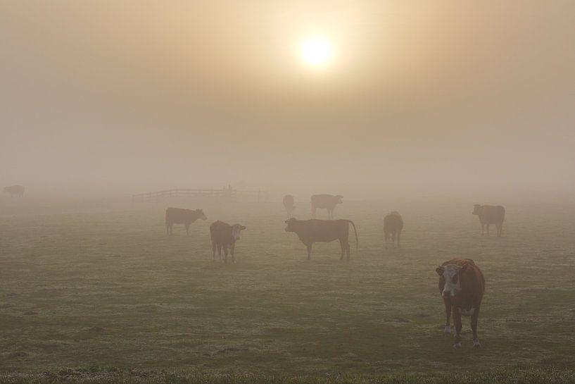 Koeien in de mist van Marcel Verheggen