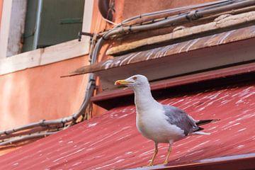 Meeuw op het dak van Mirjam Welleweerd