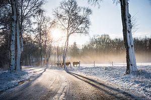 Winterse Zonsopkomst Dwingelderveld