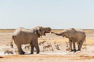 Drinkende olifanten in Etosha National Park, Namibië van