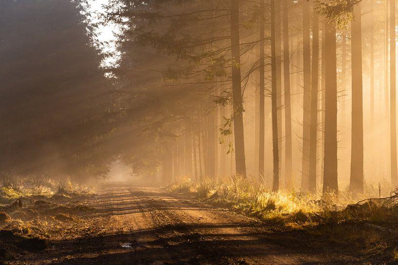 Zonnestralen in het bos op een mistige ochtend van Theo Klos