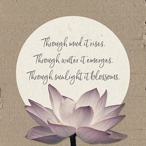 Through mud it rises - lotusbloem van