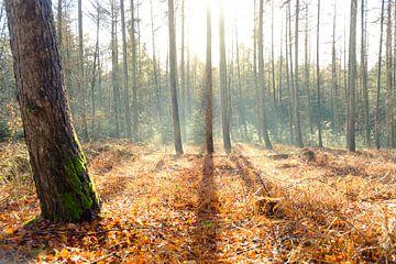 Schaduwlijnen in het bos sur Arjen Roos