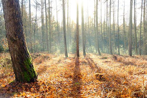 Schaduwlijnen in het bos
