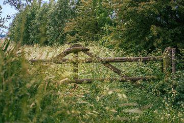 Klassiek houten hekwerk tussen het hoge gras van Fotografiecor .nl
