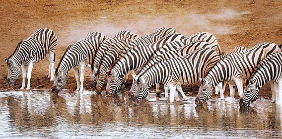 Zebras im Etosha-Nationalpark, Namibia