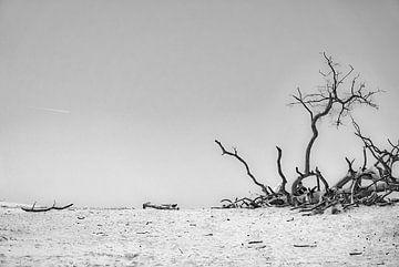 Äste und Sandflächen von Pierre Verhoeven