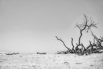 Takken en zandvlakte van Pierre Verhoeven
