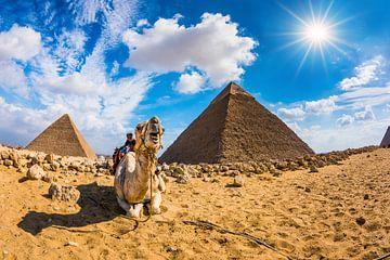 Kamel in der Wüste von Günter Albers