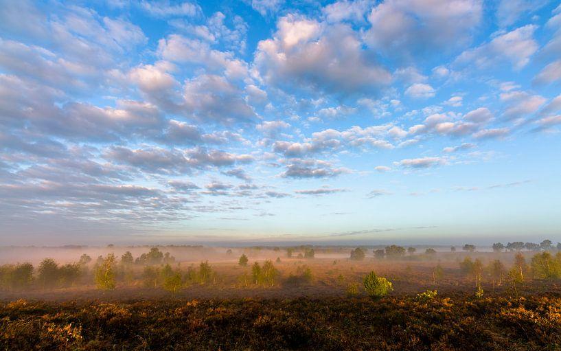 Misty Morning Sunlight van William Mevissen