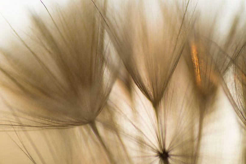 Touched by sunlight van Birgitte Bergman