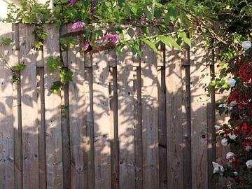 Zaun mit rosa, weißen und roten Blüten bewachsen von Monrey