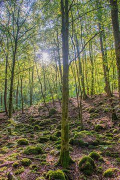 Morgenlicht im schwedischen Wald von Bianca Kramer