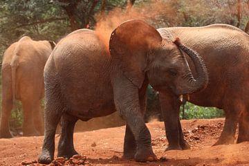 Spelende olifant von Bart Hendriks