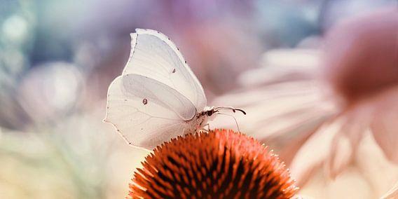 Schmetterling  van Violetta Honkisz