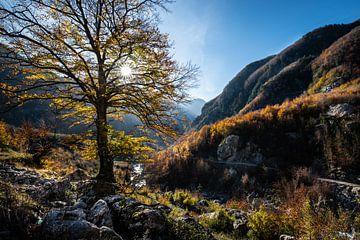 Herfst is hier van Ellis Peeters