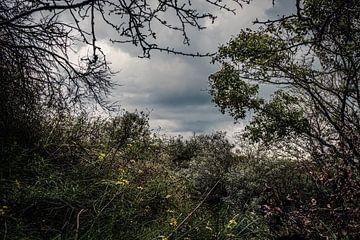 In het hoge herfstgras is af en toe een geel bloemetje zichtbaar. van MICHEL WETTSTEIN