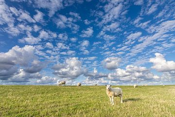 Schapen en schapenwolken van Anja Brouwer Fotografie