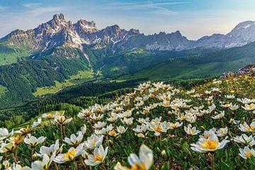 """Paysage de montagne """"Fleurs dans les Dolomites de Salzbourg"""". sur Coen Weesjes"""