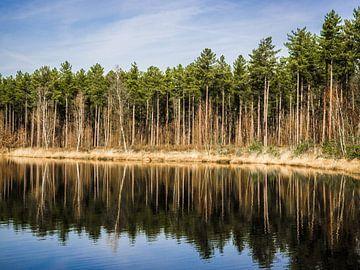 Reflektierender Wald von Stijn Cleynhens