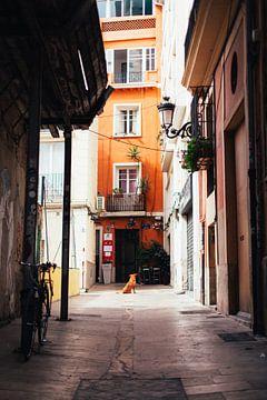 Hond in Valencia van Louise van Gend