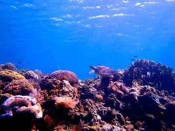 Zeeschildpad boven koraalrif van Harm Ormel
