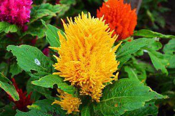 Gele bloem van Gerrit Neuteboom
