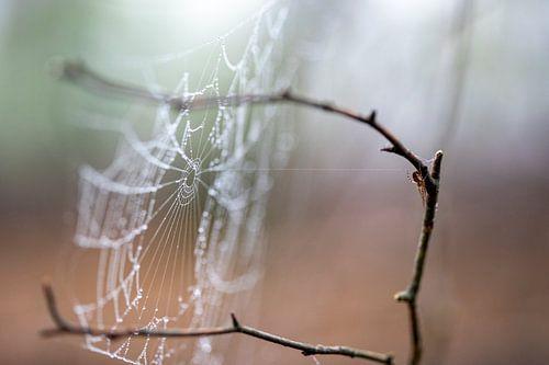DE spin heeft het web voor even verlaten