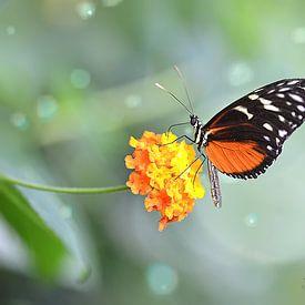 Heliconius doris vlinder op een Wisselbloem (Lantanas Camara) van Flower and Art