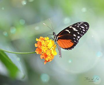 Heliconius doris vlinder op een Wisselbloem (Lantanas Camara)
