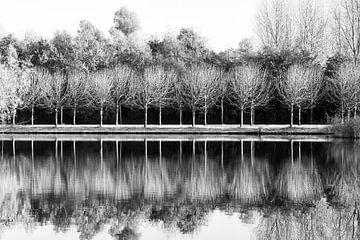 Bomen en reflecties / Zwart en wit van Lorena Cirstea
