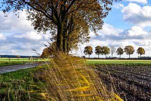 Hollands herfstlandschap van