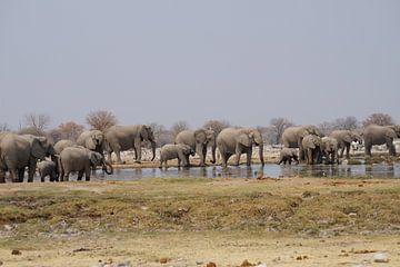 Olifanten nemen een bad van Erna Haarsma-Hoogterp