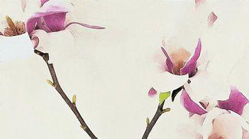 Magnolia Bloemen op Tak - Geschilderde Tekening