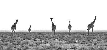 De vijf torens van Joris Pannemans - Loris Photography
