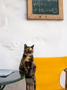 Kat in de straten van Chora op het eiland Amorgos, Griekenland van Teun Janssen