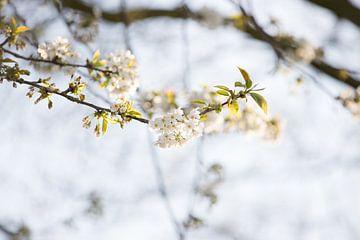 Weiße Blüte von Valerie de Bliek