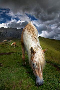 Zuid-Tiroler Haflinger-paard in de Dolomieten van Martina Weidner