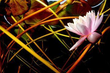Mikado van waterlelies van Filip Staes