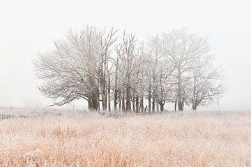 Nebel auf der Heide mit Frost auf den Bäumen von Jenco van Zalk