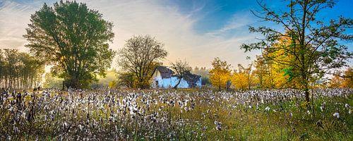 Zonsopkomst boven katoenbollen in de herfst, Hongarije