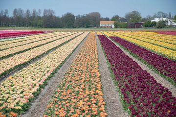 United colors of flowers I van Arthur Wijnen