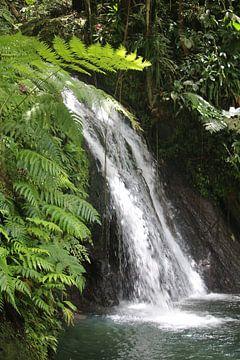 Chute d'eau idyllique dans la jungle sur Ines Porada