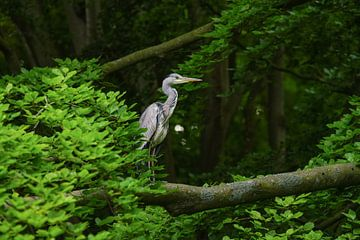 Reiger in een boom van Dirk van Egmond