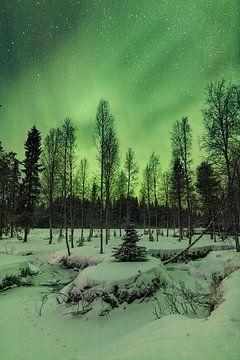 Fins lapland von Luc Buthker