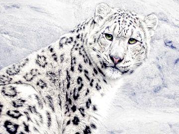 Der Schneeleopard II von Joachim G. Pinkawa
