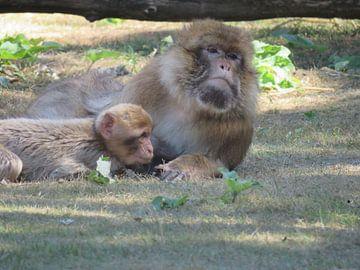 Moeder aap met haar baby von Ineke Duijzer