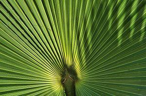 Palm van Paul Arentsen