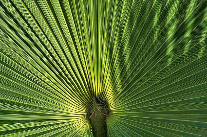 Palm sur Paul Arentsen
