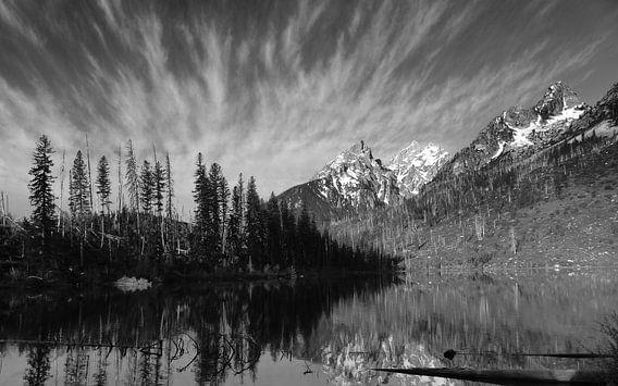 Grand Teton bergketen National park Verenigde Staten van bird bee flower and tree